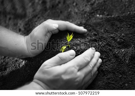 Image of male hands transplanting young plant