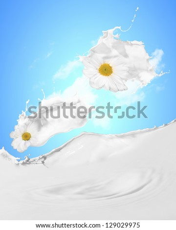 Image of milk splashes with camomile against color background