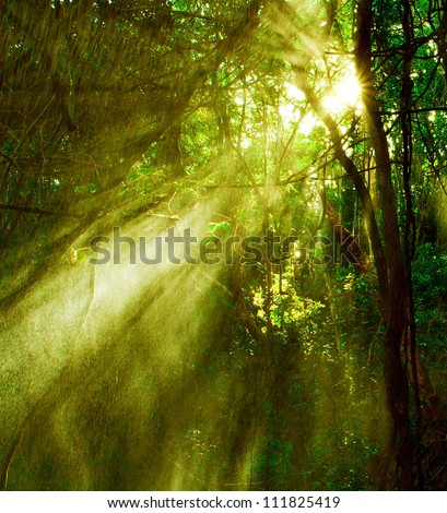 Image of misty rainforest and bright sun beams through trees branches, autumn dark woodland, shine morning sunray in fresh green forest, tropical woods, environment of jungle, wildlife concept
