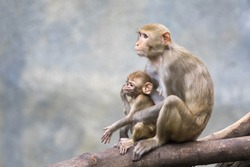 Image of mother monkey and baby monkey sitting on a tree branch.