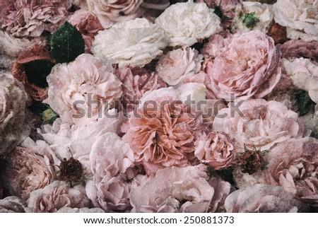 Image of nostalgic, vintage roses background.