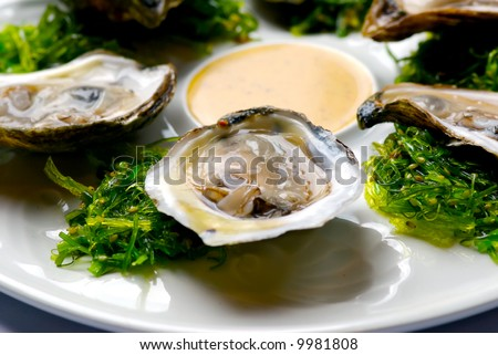 Image of oysters on garnish with sauce - stock photo