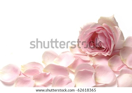 Image of pink roses and petals - stock photo