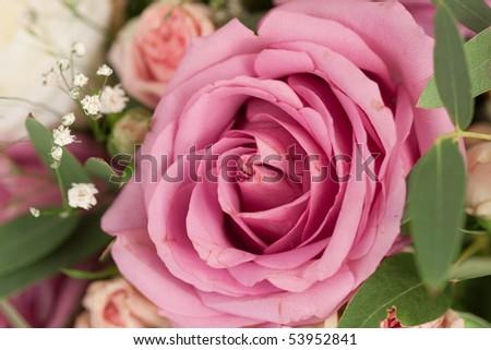 Image of purple rose - detail