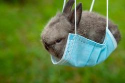 image of rabbit mask grass background
