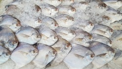 Image of raw fish in ice at a supermarket.