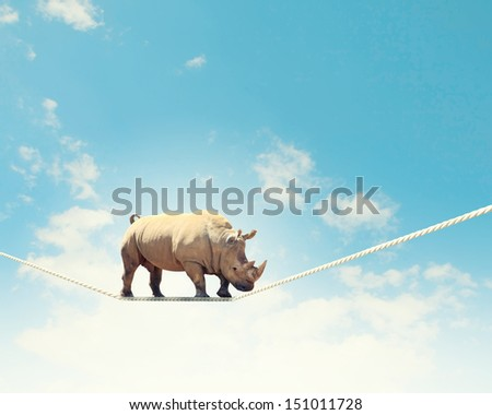 Image of rhino walking on rope high in sky