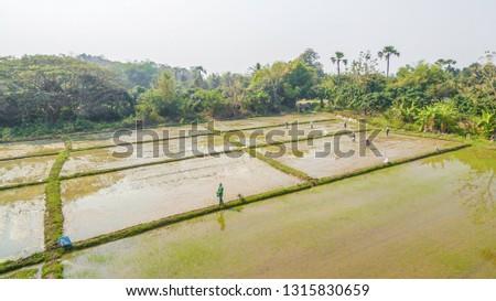Image of rice farming rice farming work of Thai farmers.Happy Farm.Happiness of farming.
