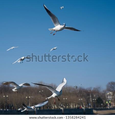 Image of seabirds. Image of seagulls. #1358284241