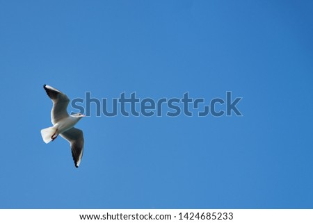 Image of seabirds. Image of seagulls. #1424685233