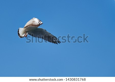 Image of seabirds. Image of seagulls. #1430831768