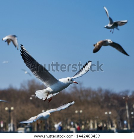 Image of seabirds. Image of seagulls. #1442483459