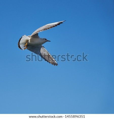 Image of seabirds. Image of seagulls. #1455896351