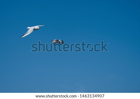 Image of seabirds. Image of seagulls. #1463134907