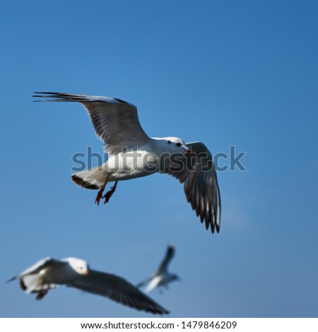 Image of seabirds. Image of seagulls. #1479846209