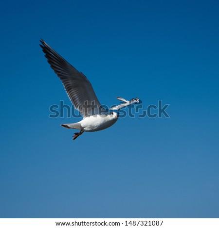 Image of seabirds. Image of seagulls. #1487321087