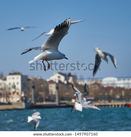 Image of seabirds. Image of seagulls. #1497907160