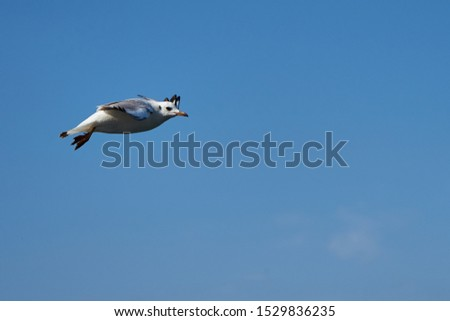 Image of seabirds. Image of seagulls. #1529836235