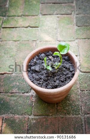 image of small tree on planter - stock photo