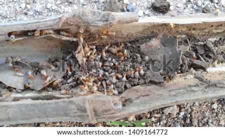 Image of termites eating wood