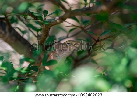 Stock Photo Image of Thailand chameleon, micro photos, close up