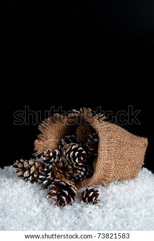 Image of the bag on the snow, spilled out of it with fir cones