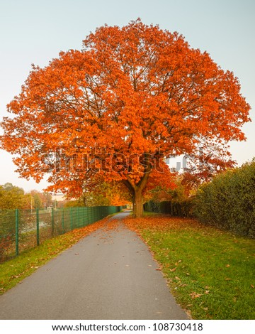 Image of the red autumn oak tree