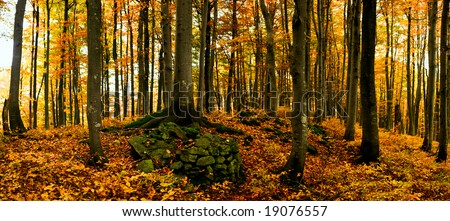 Image of tree in autumn forest. Panorama. - Shutterstock ID 19076557