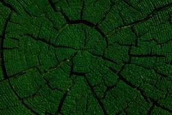 image of tree stub background