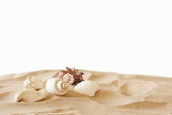 Image of tropical sandy beach and seashells. Summer concept. isolated on white