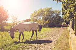 Image of two horses in a pen, wearing fly masks and quilts.