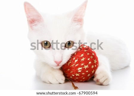 Image of white cat with red toy ball in studio over white background