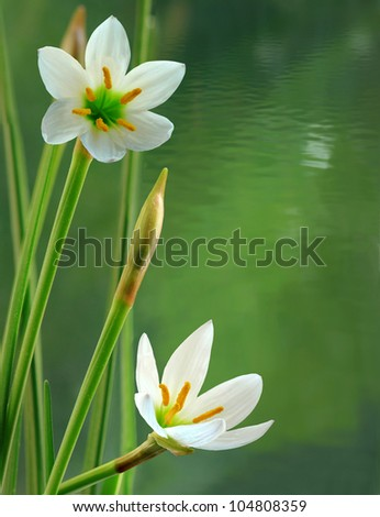 Image of white flowers against a background of rippling water