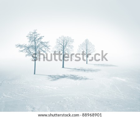 Image of white snow tree on a white background
