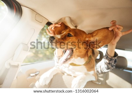 Image of woman playing around with her funny pedigree puppy while riding in car