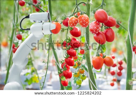 Image processing technology was apply with The robot to used to harvesting tomatoes in agriculture industry #1225824202