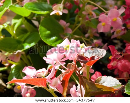 Image shows a beautiful flowers in garden
