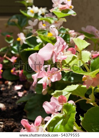 Image shows a beautiful flowers in garden on sun - stock photo