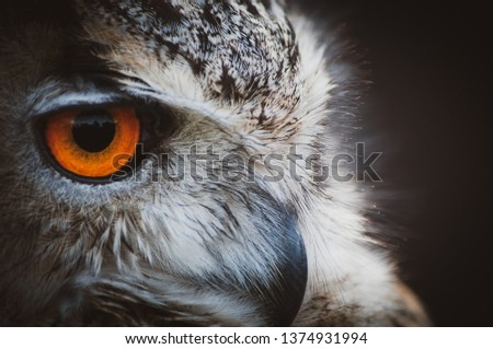 Image shows a close up picture of an owl with a bright orange eye starting into the distance. Coloured photo with a blurred background.