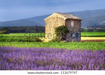 Image shows a lavender field in the region of Provence, southern France