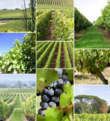 Images of a vineyard
