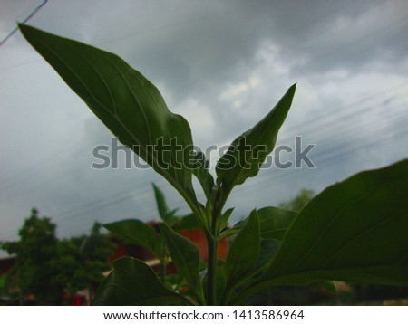 Images of leaves and sky              #1413586964