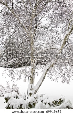 Images of snow covered trees in a backyard after large winter snow storm
