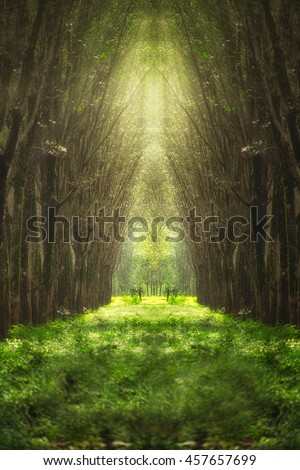 stock photo imaginary tree tunnel nature fantasy woods trees forest and nature tunnel beautiful tree arch 457657699 - Каталог — Фотообои «Балконы, арки»