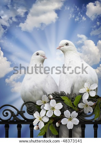 Imagination on a theme of love, spring and renovation in a spirituality and heart of person. Two love doves against blue sky in solar beams as a care and fidelity symbol. - stock photo