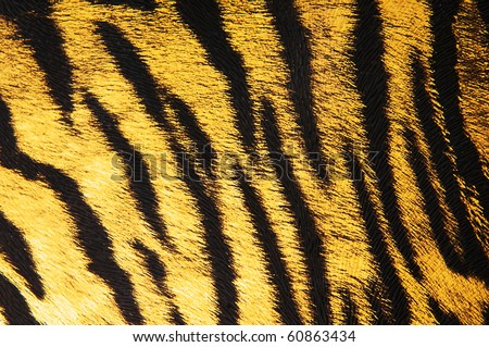 Imitation of tiger leather as a background