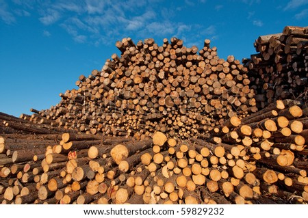 Immense softwood lumber pile in Saguenay Quebec