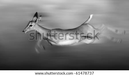 Impala running and jumping at full speed