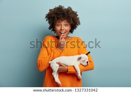 Impressed surprised dark skinned young lady, looks with great wonder and amazement, hears thrilled story from handler, carries white french bulldog with unique skills, dressed in bright sweater