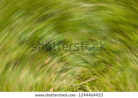 Impression with green grass. The camera made a rotating motion while taking the picture. Background photo blurred